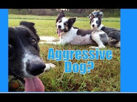 If Your Dog Is Aggressive Where Do You Start Dog Training