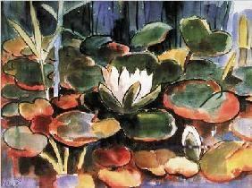 Schmidt-Rottluf - Waterlilies  - (KS-191)