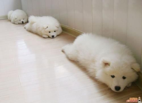 puppies sleeping in a roll