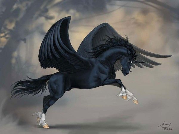 Black hippogriff