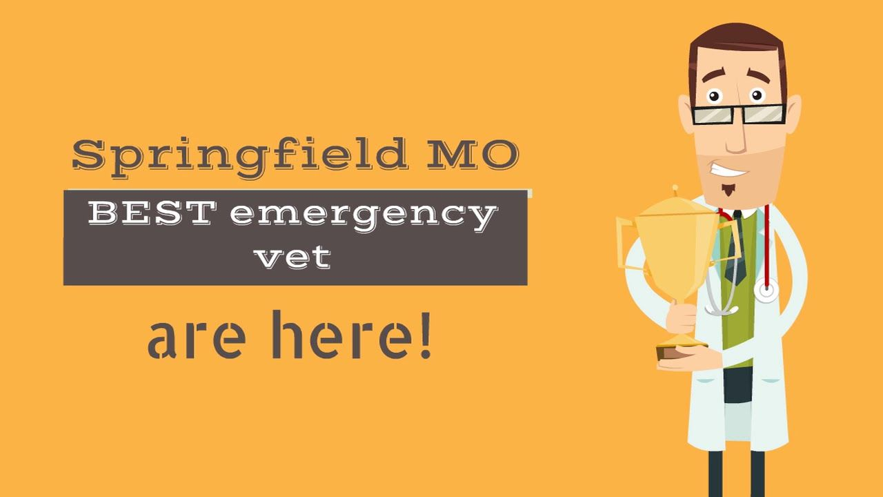 Emergency Vet Springfield Missouri is a state of the art