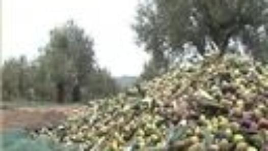 الصعوبات التي تواجهها صناعة زيت الزيتون في تونس Outdoor Plants Snow