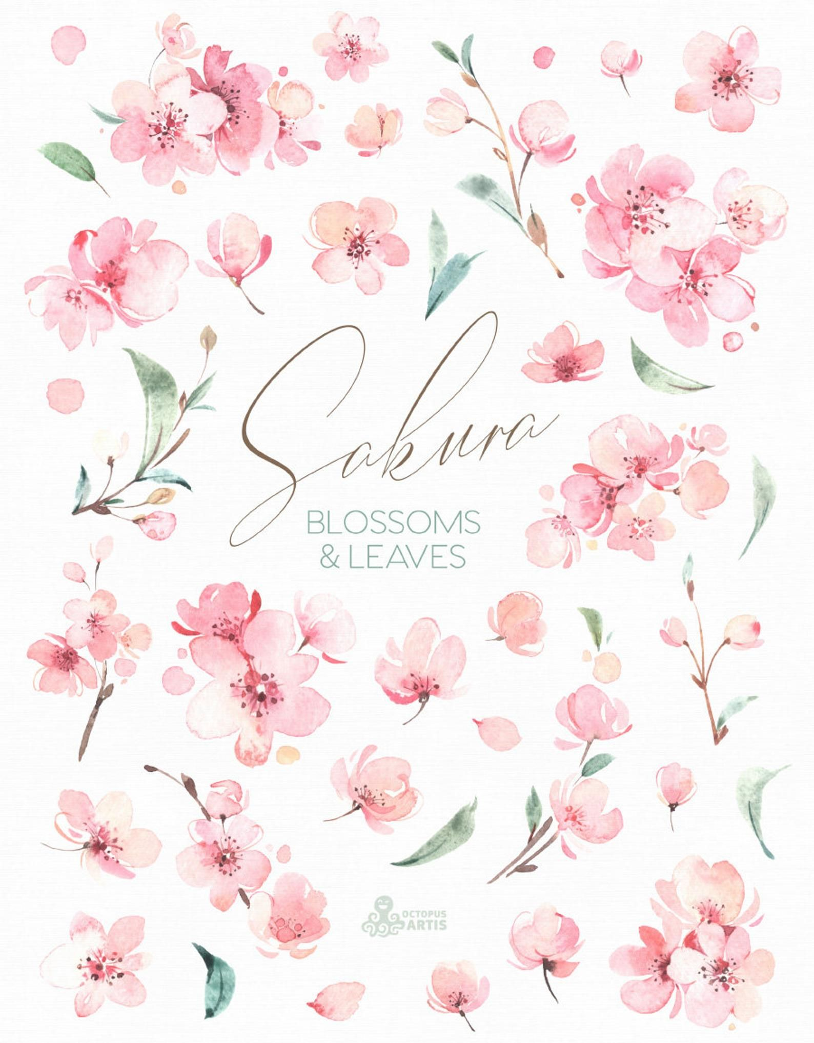 Sakura Blossoms Leaves Watercolor Floral Clipart Cherry Fresh