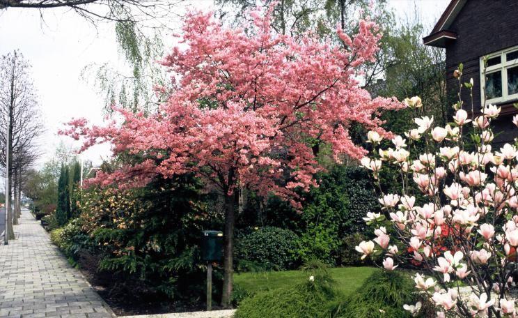 hausb ume f r kleine g rten garten pinterest gardens. Black Bedroom Furniture Sets. Home Design Ideas