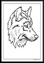 Wolf Head Coloring Sheet Taken