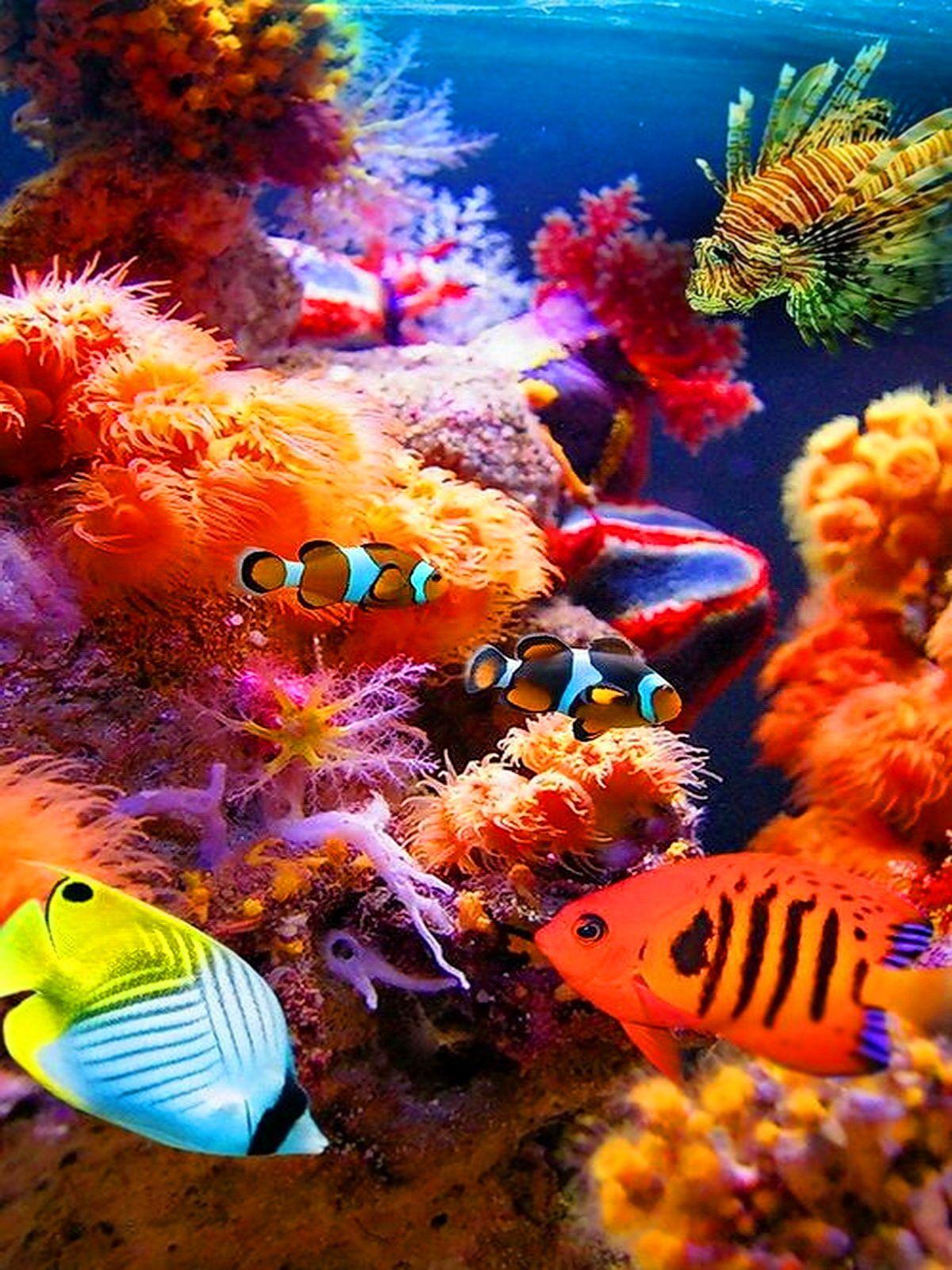 Pin by خالد العبادي Khaled ALabbade on تحت الماء - Underwater ...