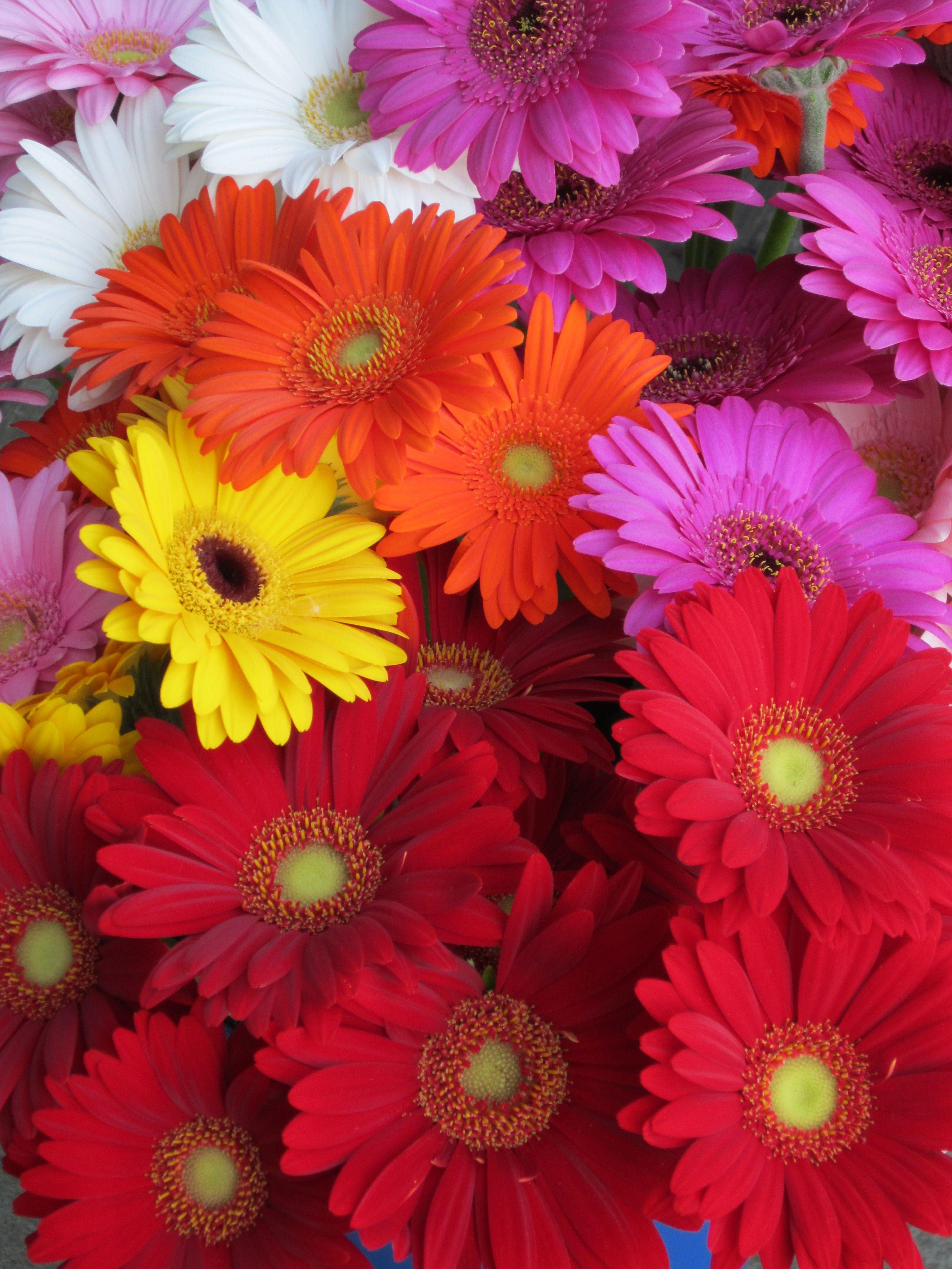 Glorious Gerbera Bouquet Jpg 3000 4000 Beautiful Flowers Flower Phone Wallpaper Flower Wallpaper