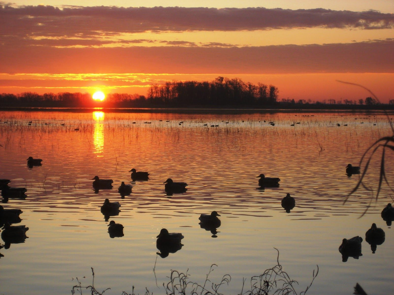 National Geographics Mallard Duck Pictures Duck Wallpapers