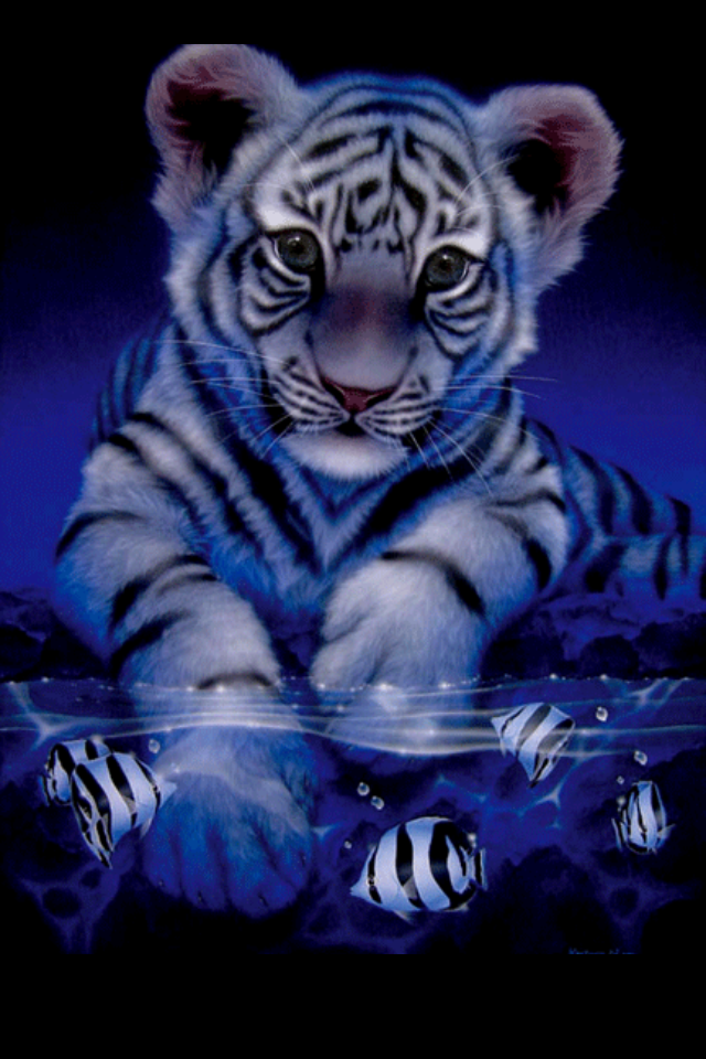 White Tiger Baby Tiger Pictures Cute Tigers Tiger Wallpaper