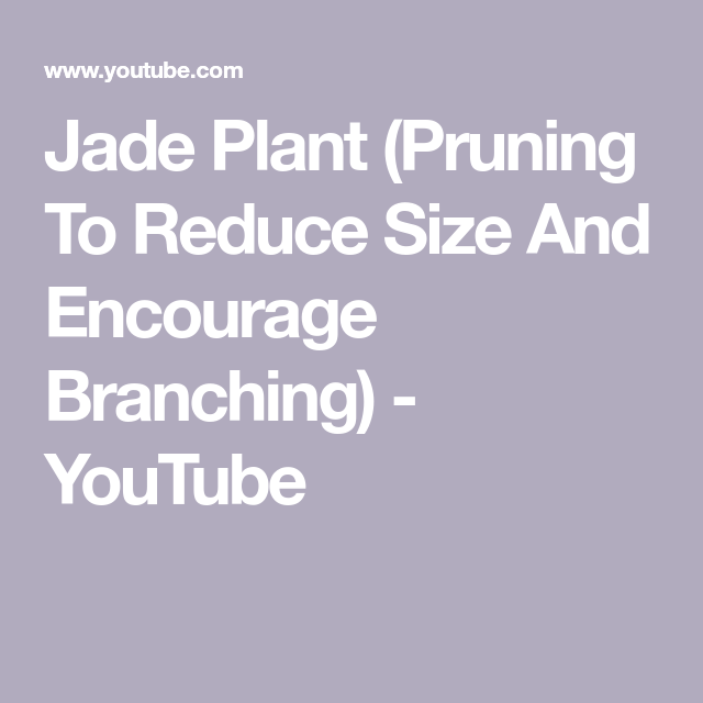 Jade Plant Pruning To Reduce Size And Encourage Branching Youtube Jade Plant Pruning Jade Plants Prune