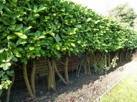 10 ideas for garden improvements~Andrew Jordan Garden DesignAndew Jordan Garden Design