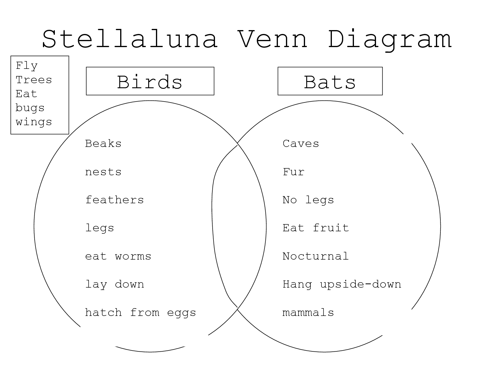Comparing Bats And Stellaluna Stellaluna Venn Diagram