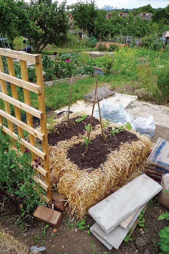 Unconventional Gardening Methods: Pros and Cons - Organic Gardening ...