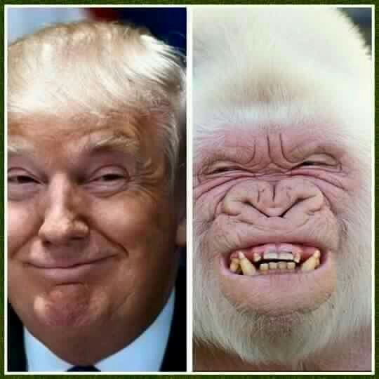 I really hate degrading primates by comparing them with whatever that is on the left, but...