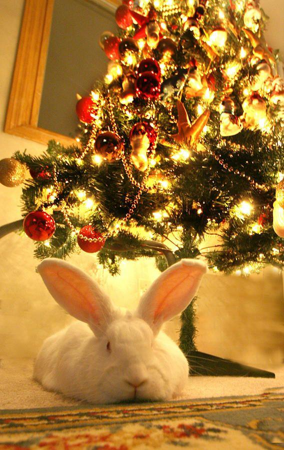 New Zealand White Rabbit Under The Christmas Tree In 2020 Christmas Bunny Christmas Animals Rabbit