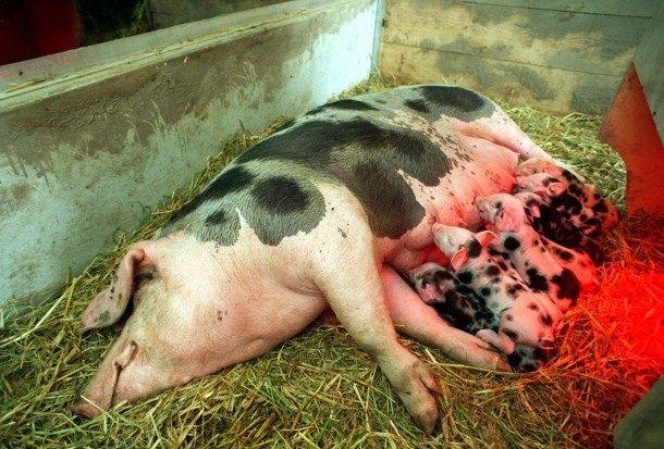 Carsten Höller + Rosemarie Trockel, Ein Haus für Schweine und Menschen, 1997