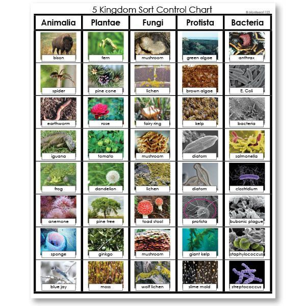 Six Groups Of Life Sorting Cards For Fungi Animals