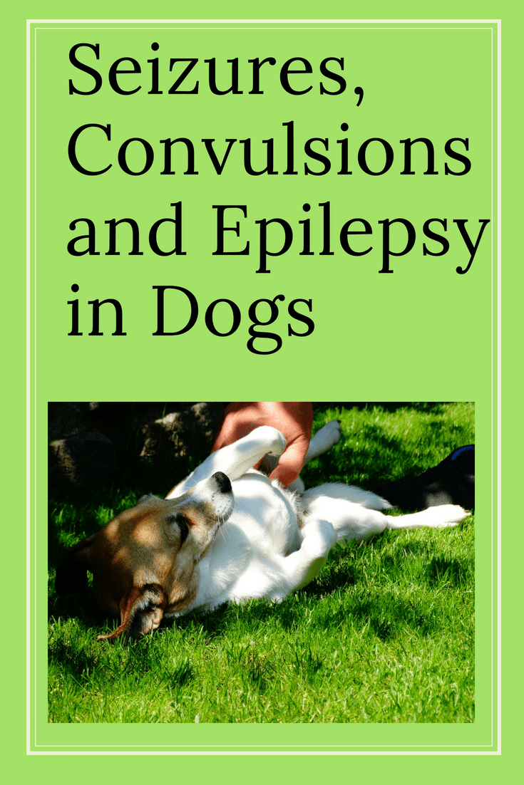 Seizures In Dogs Convulsions And Epilepsy Epilepsy In Dogs Dog