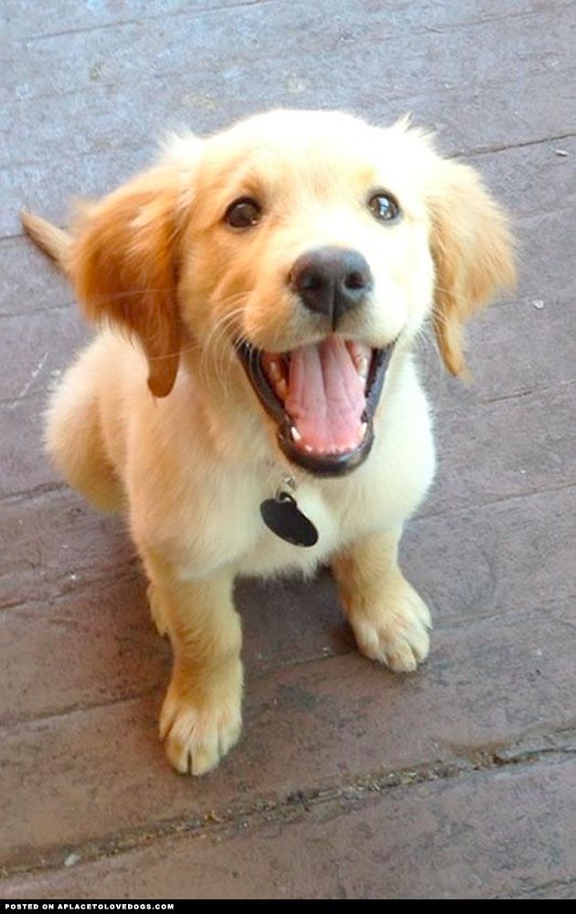 One Happy Puppy Visit Our Poster Store Rover99 Com Cute