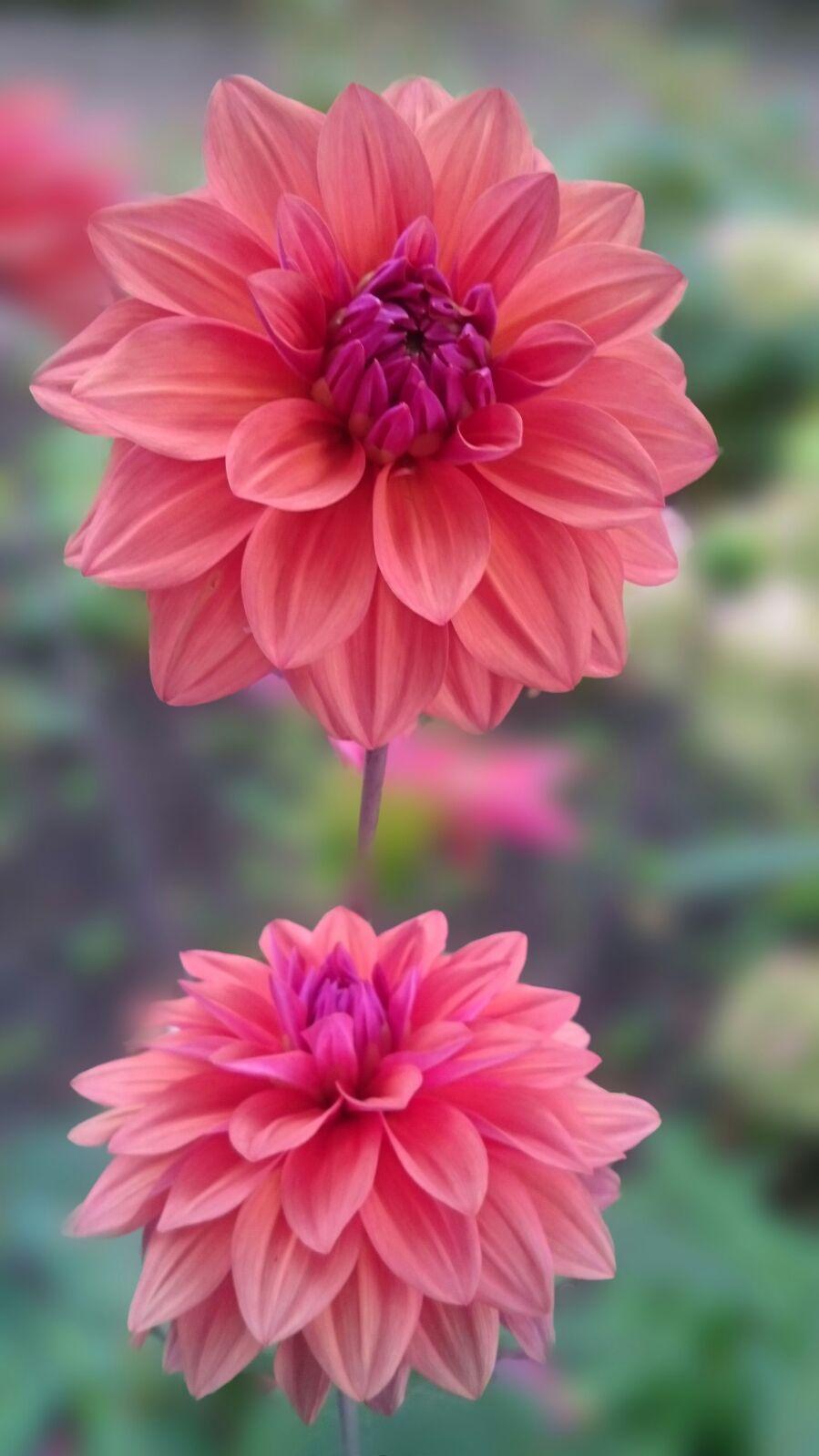 Pin By Amar Kumar On Flowers Painting Flowers Tutorial Pretty Flowers Beautiful Flowers