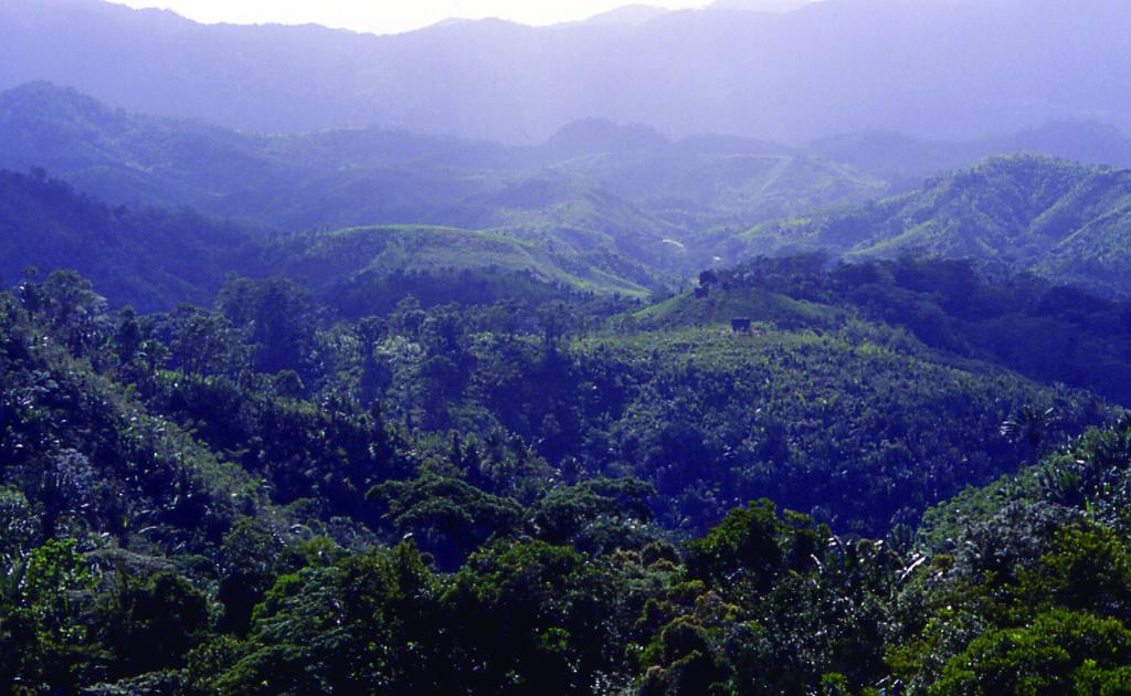 Rainforest in eastern part of Madagascar, near Manakara