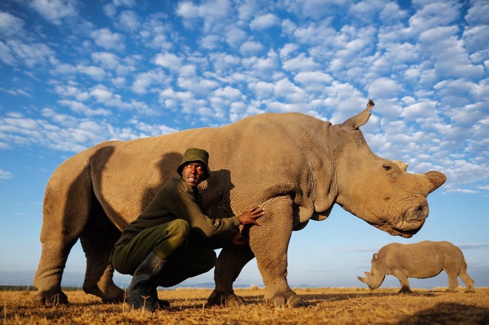 Pin by pjuergy on Friends | White rhinoceros, Northern white