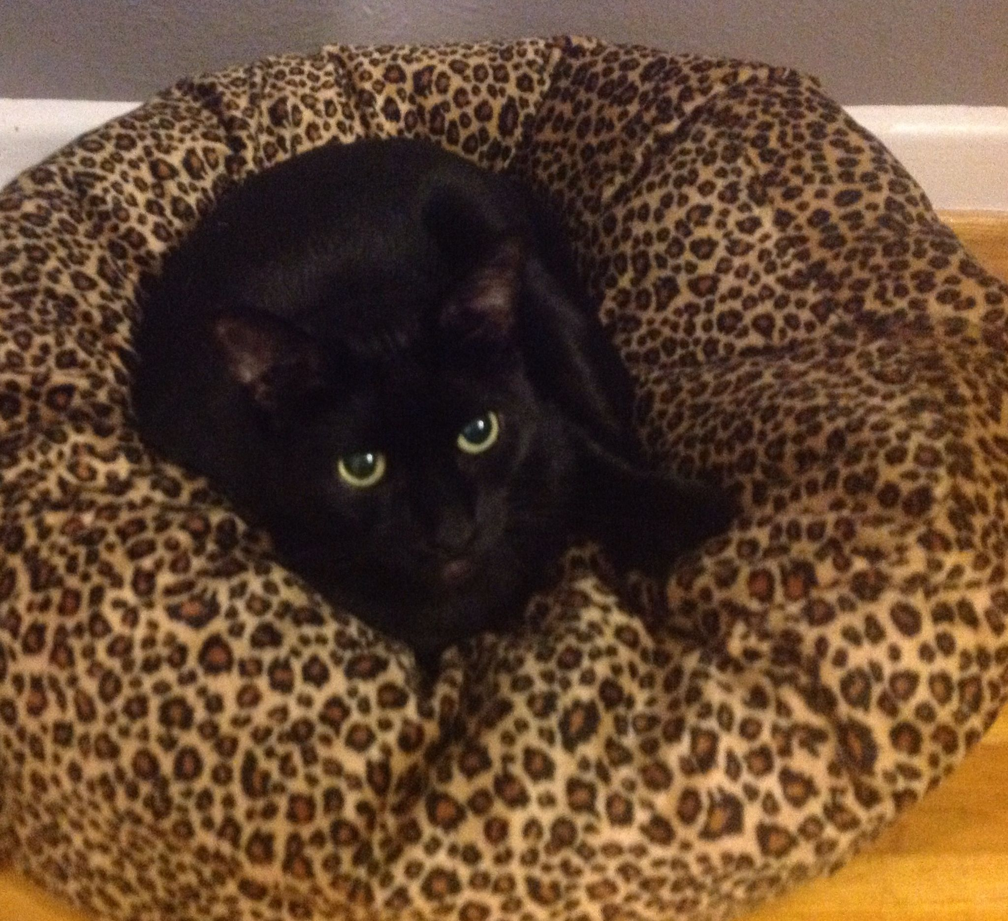 I look so handsome in my new bed...the mighty panther at