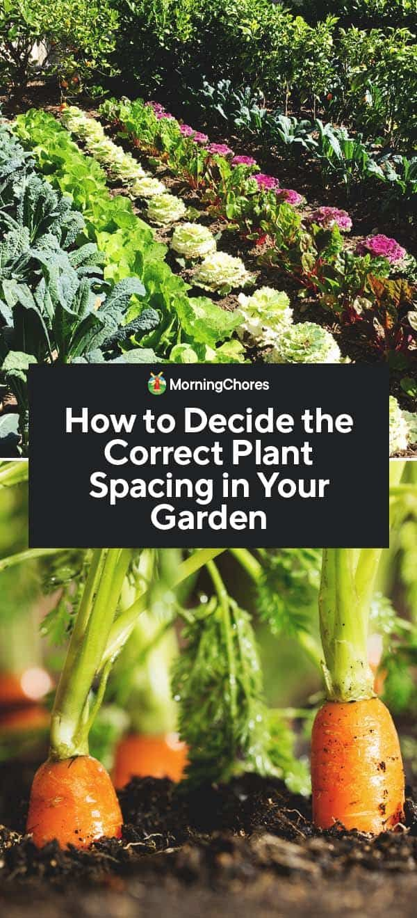 How to Decide the Correct Plant Spacing in Your Garden