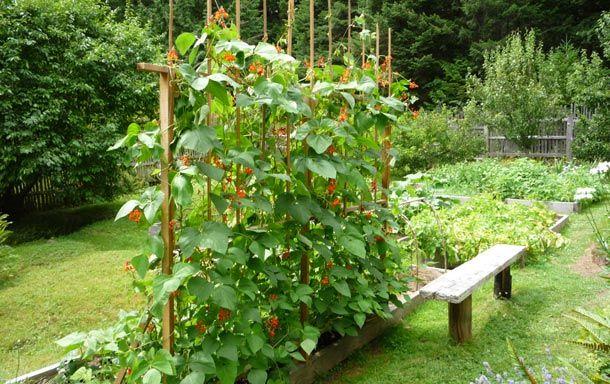How To Build A Bean Trellis For Raised Garden Beds Raised Garden