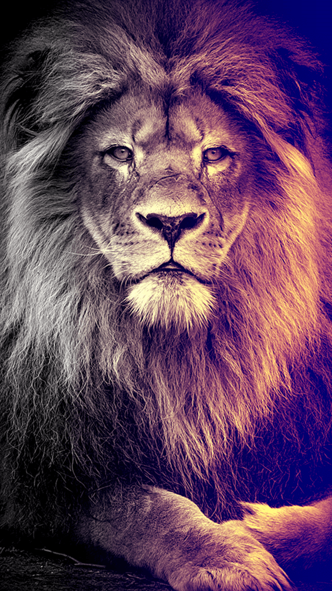 Lion Iphone Android Iphone Desktop Hd Backgrounds Wallpapers 1080p 4k 124887 Hdwallpapers Androidwall Lion Wallpaper Cat Phone Wallpaper Lion Art