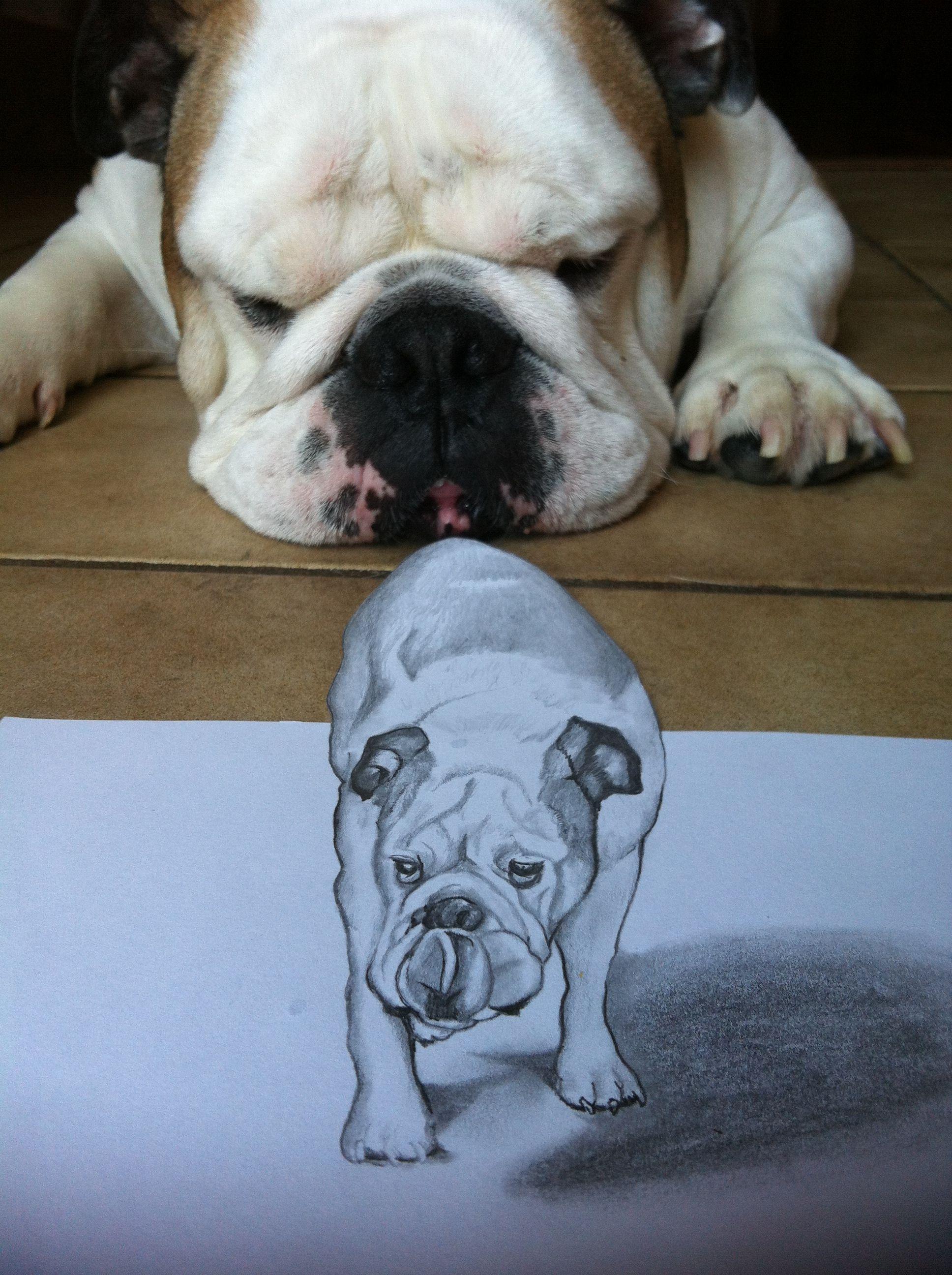 A Pencil Drawing I Did Of My Bulldog Diesel Bulldog Dog Face