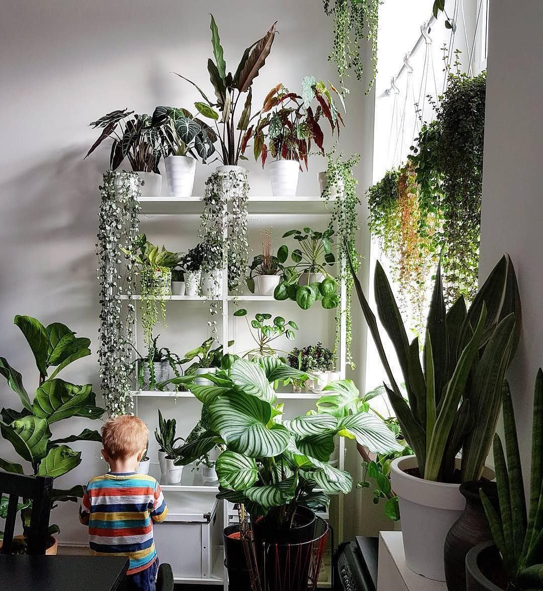 What A Wonderous Way To Grow Up Surrounded By An Indoor Jungle This Vibrant This Image Makes Me Wonder Did You G Plant Decor Indoor Plants Indoor Plant Wall
