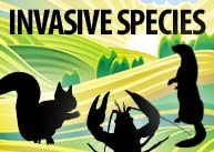 FREE Games and Activities to teach kids about UK Invasive Species
