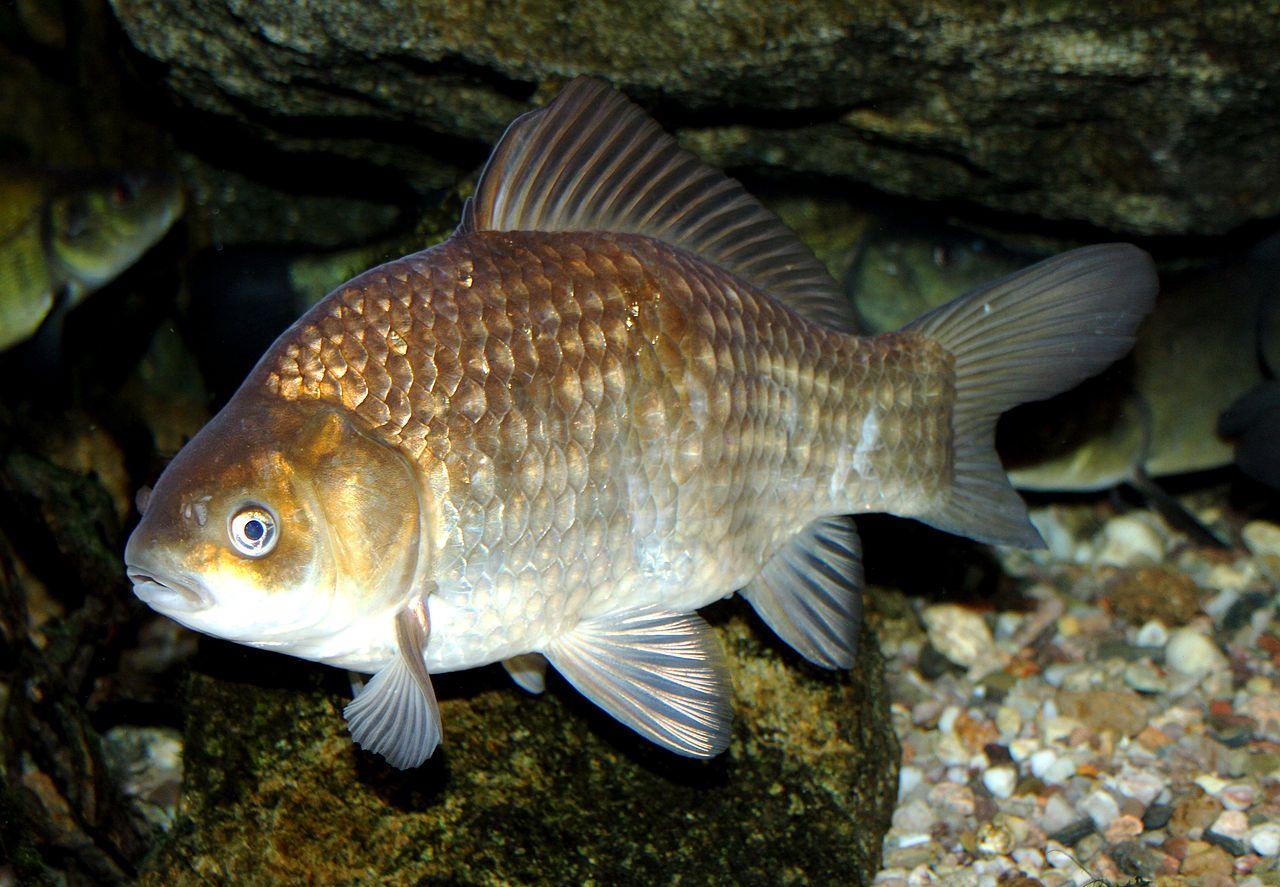 Pin On Pești