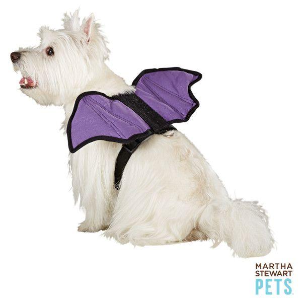 Martha Stewart Pets Bat Wing Harness Harnesses Petsmart Bat Animal Pet Costumes Pets