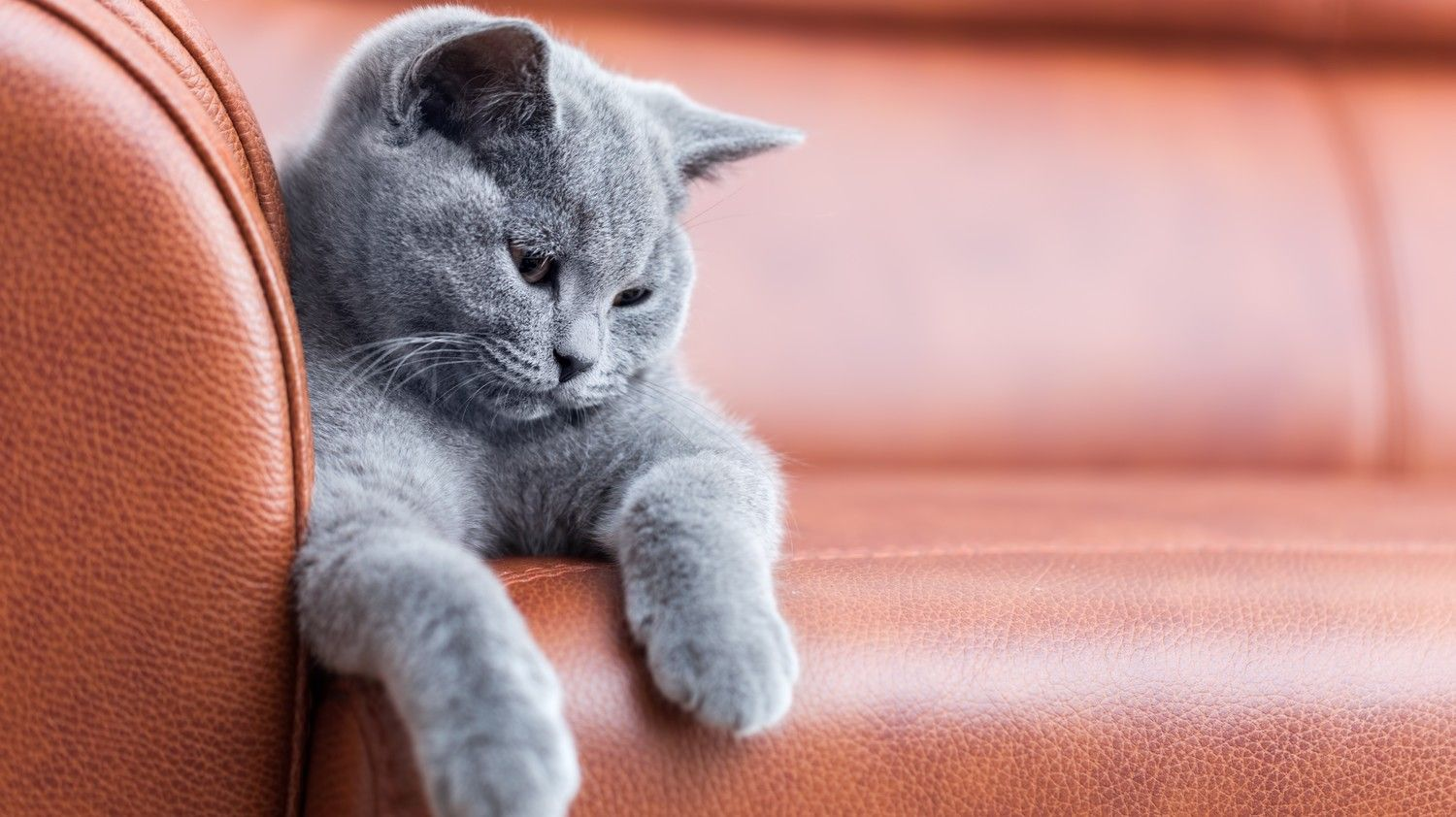 How To Stop Your Cats From Scratching The Furniture Cats Cat Scratching Cat Scratching Furniture