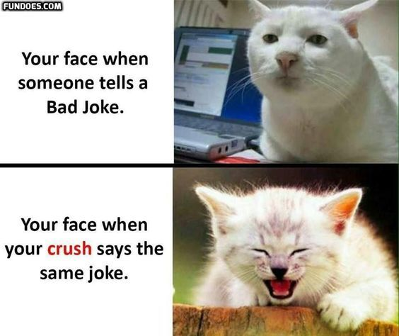 18 Hilarious Cat Memes About Crush Funny Crush Memes Funny Memes Sarcastic Cat Quotes Funny