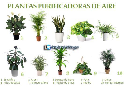 5 consejos para escoger plantas de interior para tu - Consejos de feng shui ...
