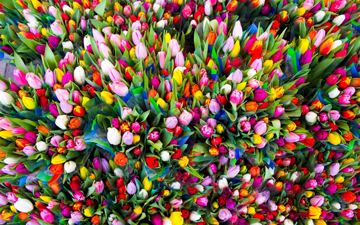 herunterladen hintergrundbild viele tulpen