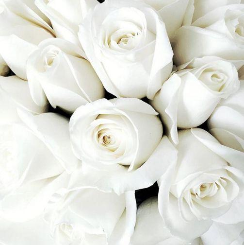 """À¸› À¸à¸ž À¸™à¹'ดย Marine À¹ƒà¸™ F L O W E R S À¸à¸²à¸£à¸ˆ À¸""""ดอกไม À¸— À¸à¸‡à¸Ÿ À¸²"""
