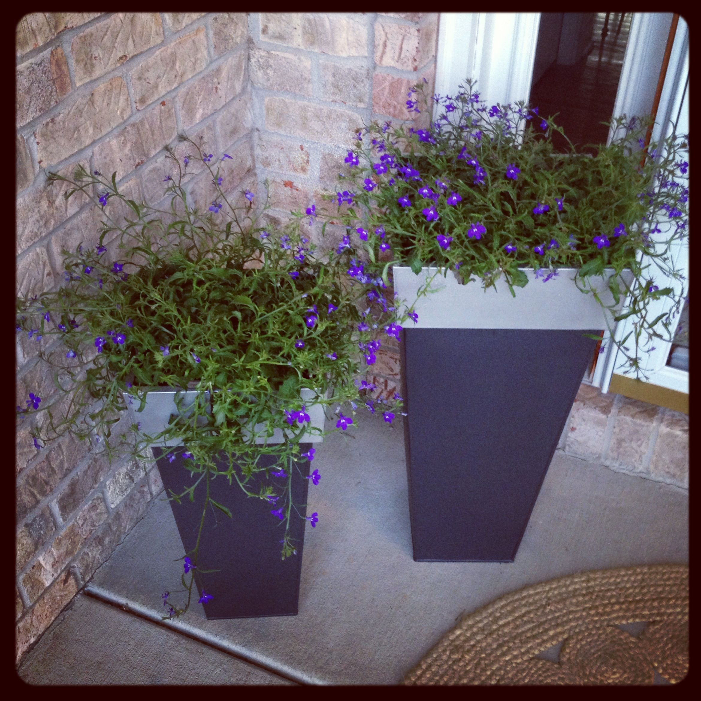 our planters stone boxwood pergola for hydrangea and lehman climbing porch planter lane in planting front