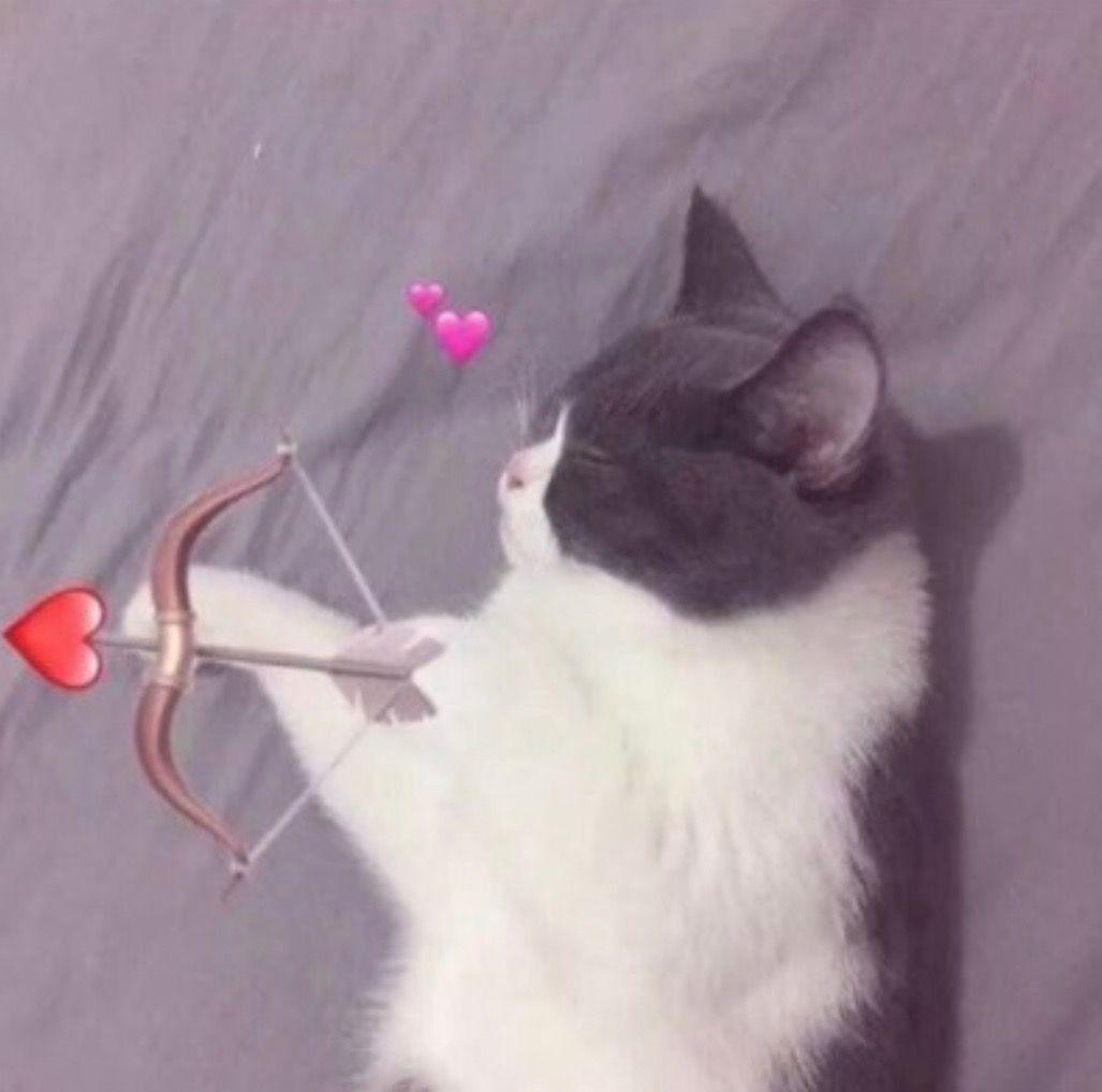 Maravilloso Fotos Gatos Fondos Compartidos Sugerencias Por Ahora Aclara Dolores Alcate Cat Icon Cute Cat Memes Cute Couple Wallpaper