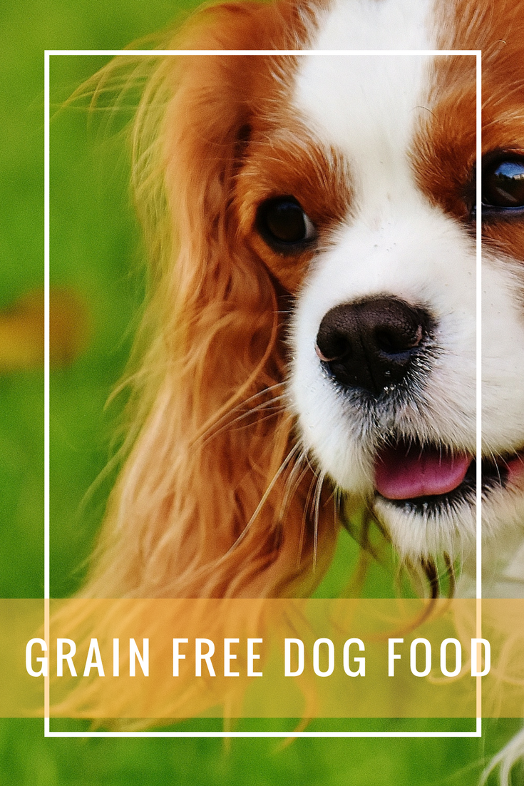 Grain Free Dog Food Is It Really Better For My Dog Here S The