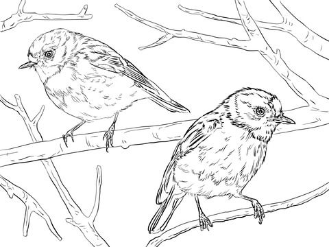 Zorzal Escarlata Australiano Dibujo para colorear | pájaros y aves ...