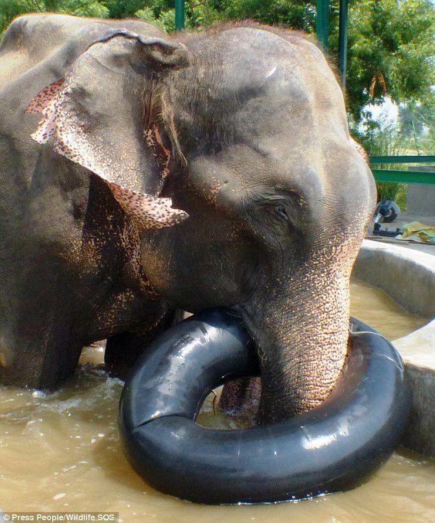 free porn elephant