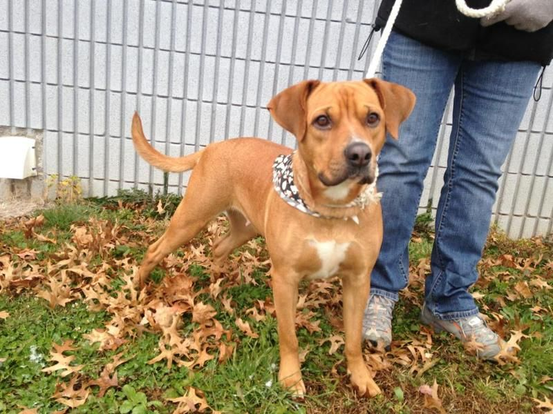 URGENT BABYDOLL IS IN A RURAL GASSING SHELTER IN BECKLEY