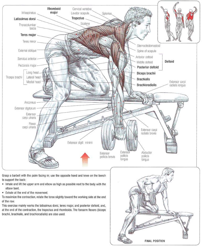 Exercise Instructions 1 Using A Flat Bench Grasp A Dumbbell With Your Left Hand 2 Rest Your Right Knee On T Fitness Body Workout Posters Muscle Diagram