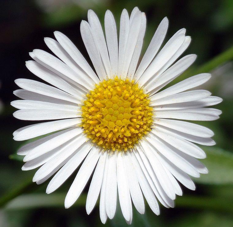Imágenes de flores bonitas que puedes plantar en el jardín