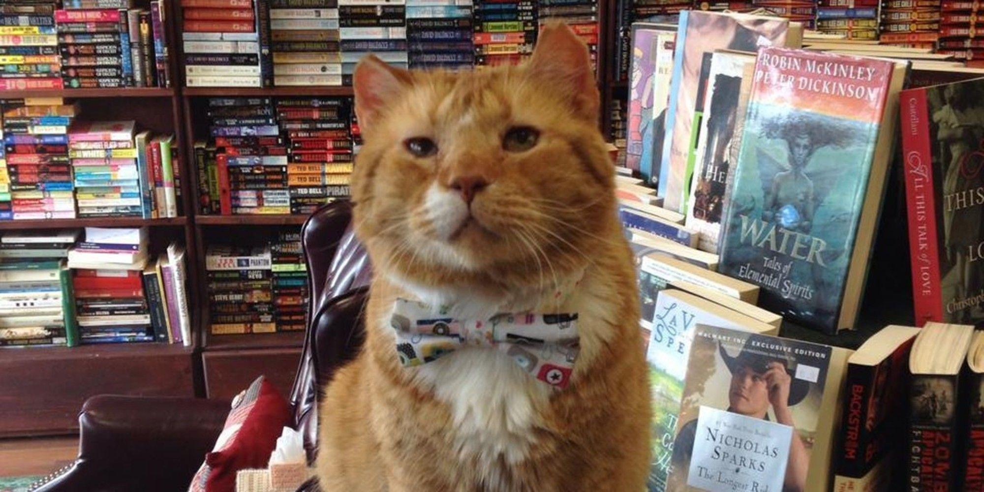 Shelter Cat Was Given A Chance Now 14 He Gives Back To People Every Day At Book Store In 2020 Bookstore Cats Cat Shelter Cat Books