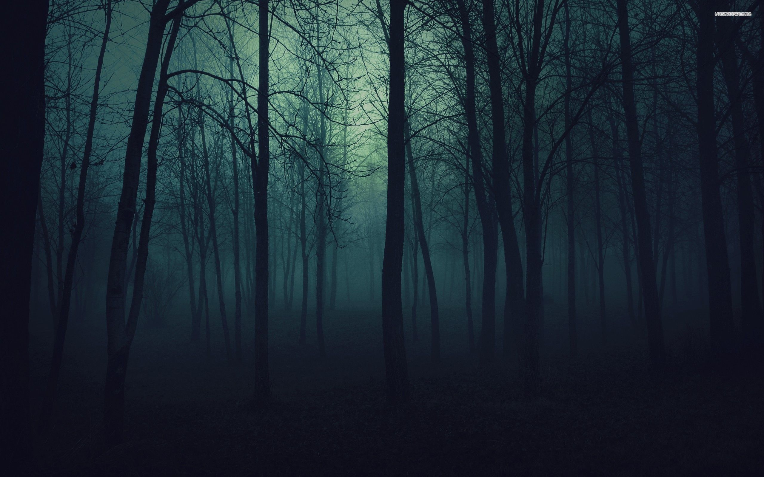 Forest At Night Trees In The Forest At Night Wallpaper 689 Night Forest Misty Forest Forest Wallpaper